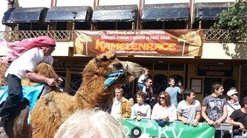 Kamelenrace Apeldoorn
